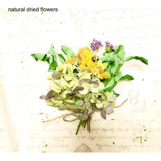 ナチュラルドライフラワー スワッグ シロタエギクと薄紫色のハイドランジア(ドライフラワー)