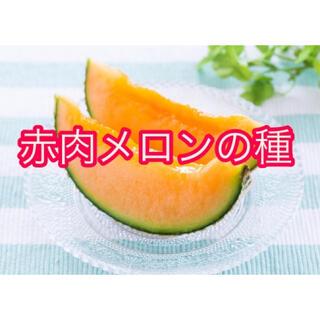 めっちゃ甘い!メロンの種(フルーツ)