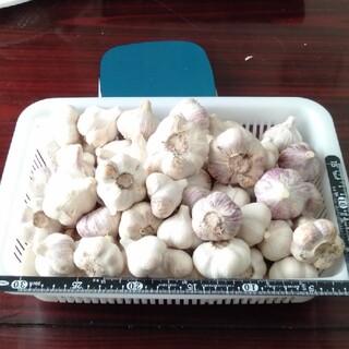 ニンニク 約3キロ(野菜)