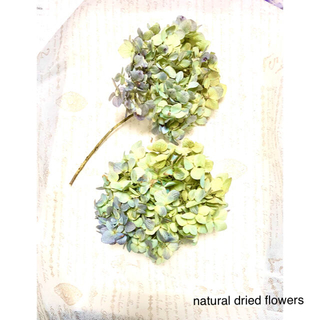 ナチュラルドライフラワー 薄紫色ハンドライジア 茎あり茎なし2つセット②(ドライフラワー)