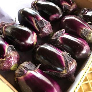 ブランド茄子【りんごあめ】水茄子食べ比べセット(野菜)