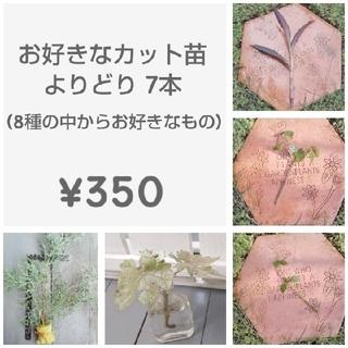 お好きなカット苗よりどり7本 ¥350(その他)