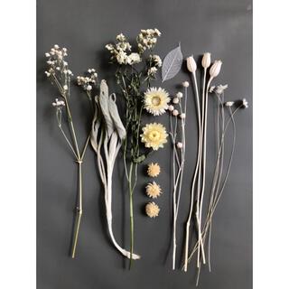 ナチュラルホワイト*ドライフラワー花材詰め合わせ(ドライフラワー)