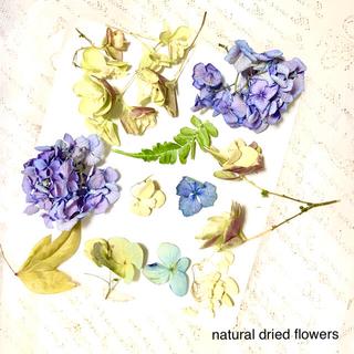 ナチュラルドライフラワー パープルのアジサイほかお花 リーフたち ヘッドのみ(ドライフラワー)