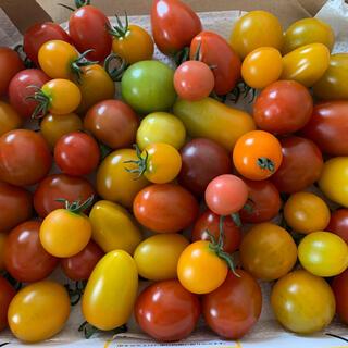 ミニトマト 1キロ ミックス(野菜)