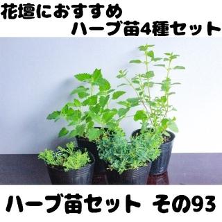 【苗販売7/25まで】要望対応可!ハーブ4苗セット(プランター)