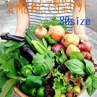 無農薬野菜詰め合わせ(野菜)