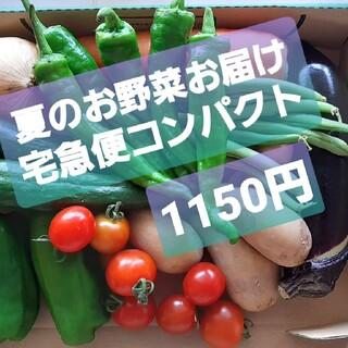 夏のお野菜のお届けお任せ。宅急便コンパクト。翌日配送地域のみm(_ _)m。(野菜)