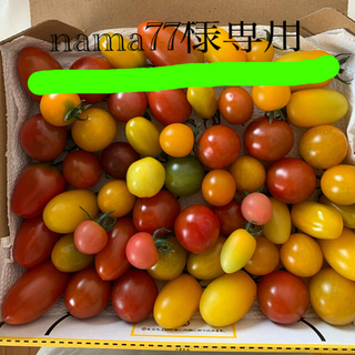 ミニトマト 2キロ(野菜)