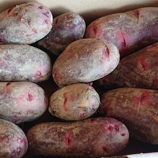 無農薬じゃがいもグランドペチカ約1,3kg 有機JAS(野菜)