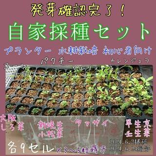 自家採種セット 野菜の種 ハーブの種 家庭菜園 種子 種(その他)