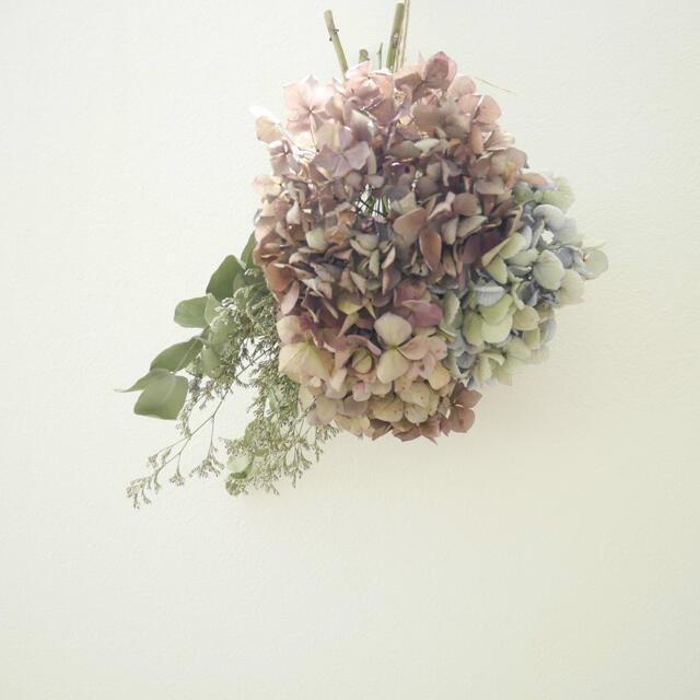 紫陽花ドライフラワー ハンドメイドのフラワー/ガーデン(ドライフラワー)の商品写真
