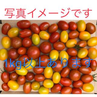 野菜:無農薬ミニトマト:箱にいっぱいまで詰めます(野菜)