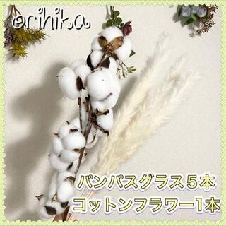 【大人気】パンパスグラス5本ホワイト コットンフラワー 送料込み ドライフラワー(ドライフラワー)