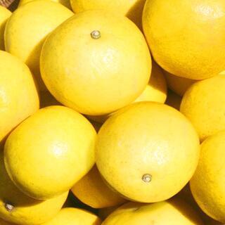 送料無料【 水晶文旦 2キロ★高級品 主に中玉】温室文旦 果物 みかん 2kg(野菜)