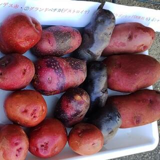 カラフルポテト祭り🌞9㌔程(野菜)