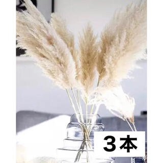 ◎限定価格◎パンパスグラス3本特大90cm前後 韓国北欧インテリア(ドライフラワー)