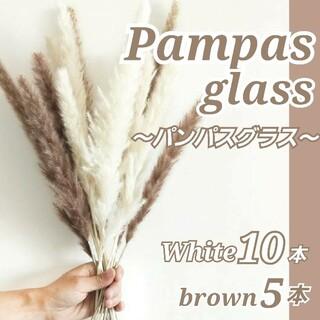 パンパスグラス ドライフラワー おしゃれインテリア 15本 花材 白 ホワイト(ドライフラワー)