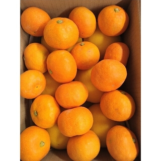 山北温室みかん 3S〜小玉 700g+温室小夏 Lサイズ 6個 高知県産(フルーツ)