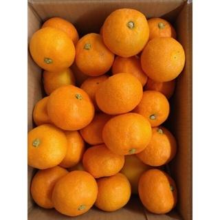 山北温室みかん 3S〜小玉 1kg+温室小夏 Lサイズ 6個 高知県産(フルーツ)