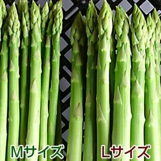 【専用】camico様 グリーンアスパラ1.3kg(野菜)