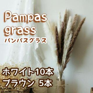 パンパスグラスドライフラワー★おしゃれインテリア 15本(ドライフラワー)