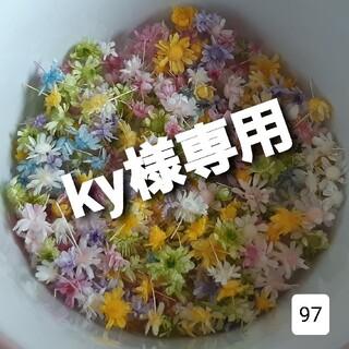 ky様専用(ドライフラワー)