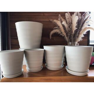 受皿付 植木鉢 プランター ポット オフホワイト 観葉植物 寄植 セット 丸 円(プランター)