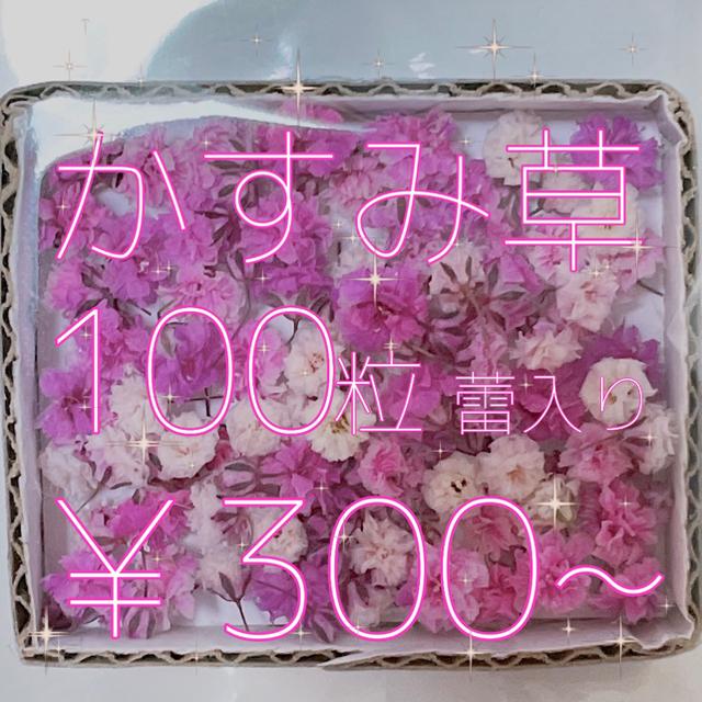 romi様  かすみ草 ドライフラワー ハンドメイドのフラワー/ガーデン(ドライフラワー)の商品写真