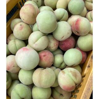 数量限定 若桃 2kg(フルーツ)