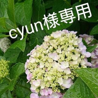 cyun様専用(ドライフラワー)