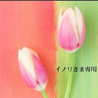 SHISEIDO (資生堂) - スノービューティー2019                  新品未使用レフィル