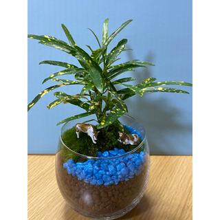 観葉植物 苔テラリウム 20(その他)