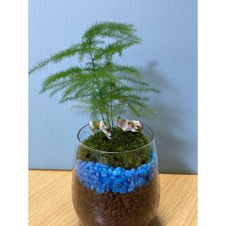 観葉植物 苔テラリウム 21(その他)