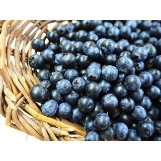 【値下げ】無農薬 ブルーベリー 650g 常温発送 コンパクト便 熊本県産(フルーツ)