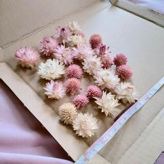 貝細工、千日紅 ドライフラワーの花材セット✨(ドライフラワー)