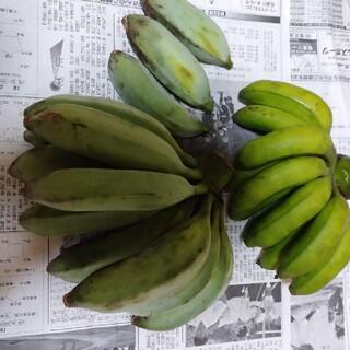 幻のアイスクリームブルーバナナに高級島バナナセット 自然栽培 農薬不使用 特産物(フルーツ)