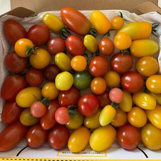 プチトマト ミックス1キロ(野菜)