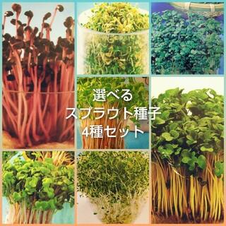 選べる4種 スプラウト種子10ml(野菜)