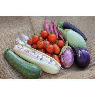 朝取れ 固定種のおまかせ野菜セット(野菜)