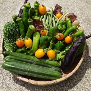 夏野菜詰め合わせセット デコきゅうり ハート、星形(野菜)