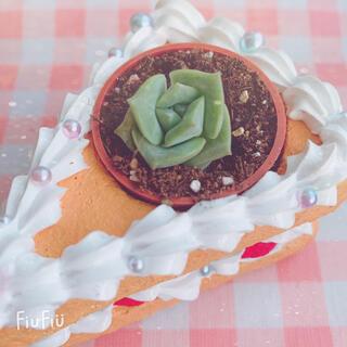 多肉植物 ラブリーローズ 1苗 小苗(その他)