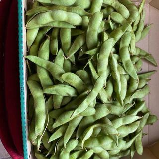 兵庫県丹波市産 黒枝豆 2キロ(野菜)