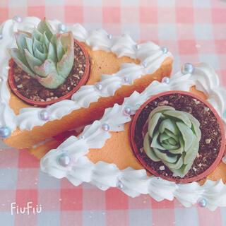 多肉植物 バイオレットクイーン 2苗(その他)