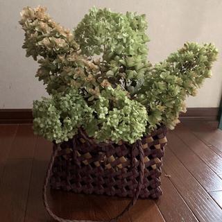 柏葉紫陽花、アナベルドライフラワー 各3本(ドライフラワー)