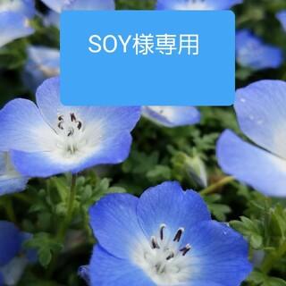 タカシマヤ(髙島屋)のFAUCHON フォション 紅茶 9点セット(茶)