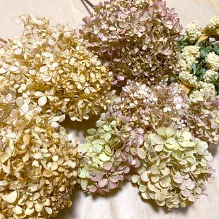 ドライフラワー 紫陽花 訳あり花材 アンティーク 茎付き(ドライフラワー)