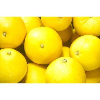 【小夏★2キロ】 日向夏 土佐小夏 ニューサマーオレンジ フルーツ みかん 蜜柑(フルーツ)