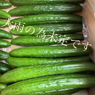 阿蘇のきゅうり ネコポスお試し1kg次回大雨の為未定(野菜)
