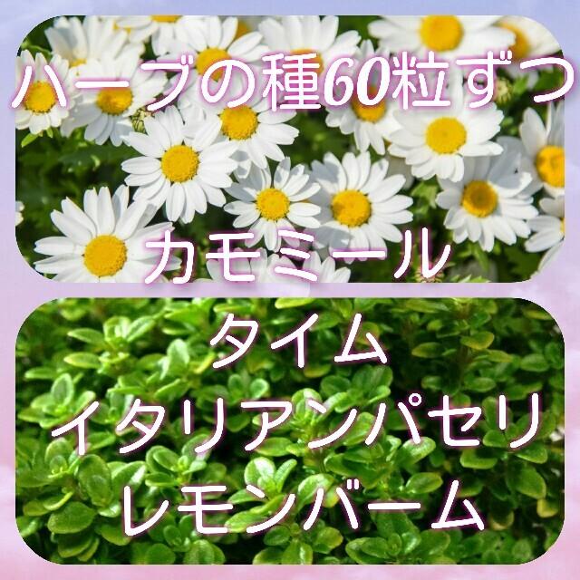 ハーブの種 ハンドメイドのフラワー/ガーデン(プランター)の商品写真